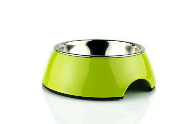 Empty green pet bowl methacrylate food container for dog or cat on picture id1163693594?b=1&k=6&m=1163693594&s=612x612&w=0&h=2w9vgz 1e4zlatlntkuw0nke1mvwj2bxl2xu9wt8tue=