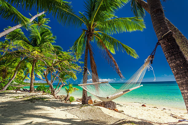 empty hammock in the shade of palm trees,  fiji - hangmat stockfoto's en -beelden