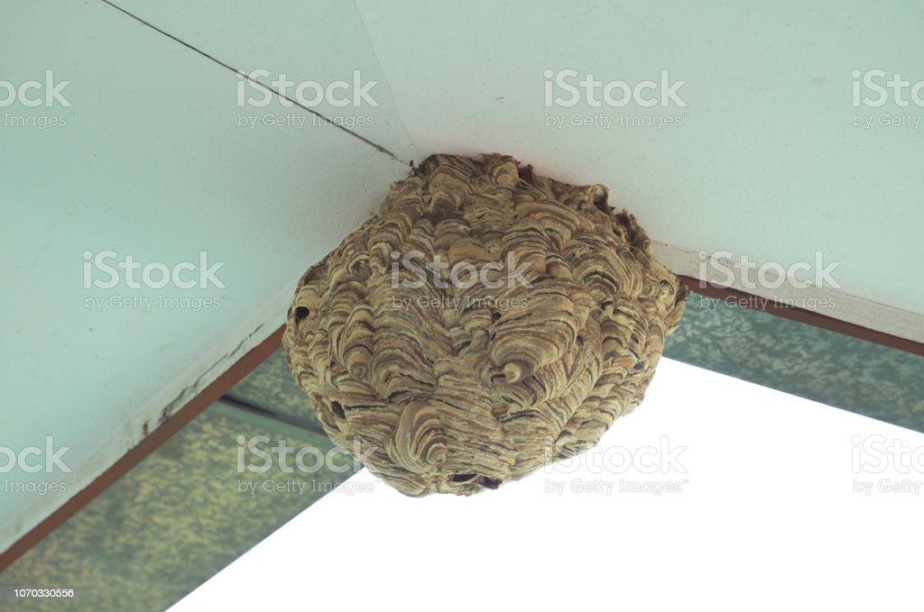 hornet vacío nido color marrón debajo de los aleros en casa, cerrar - foto de stock
