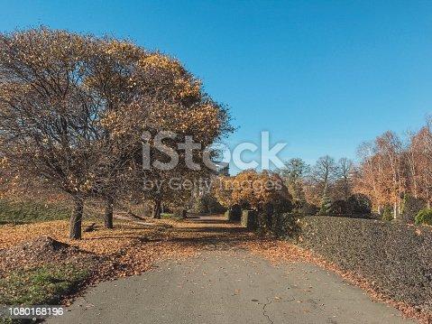 istock Empty Linden alley in Kiev Botanical garden in the fall. Ukraine 1080168196