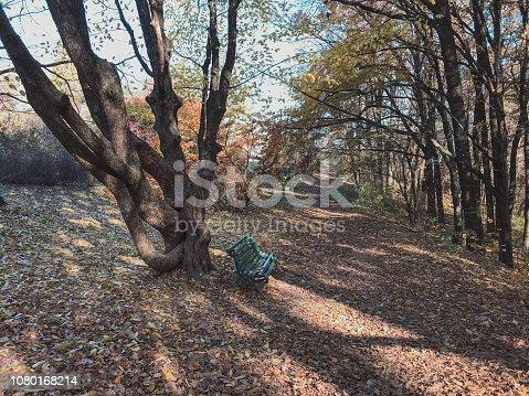 istock Empty Linden alley in Kiev Botanical garden in the fall. Ukraine 1080168214