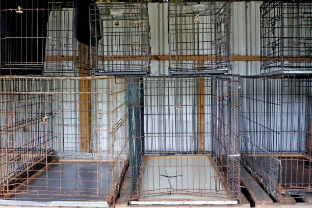 lege metalen kooien in dierenasiel - kooi stockfoto's en -beelden