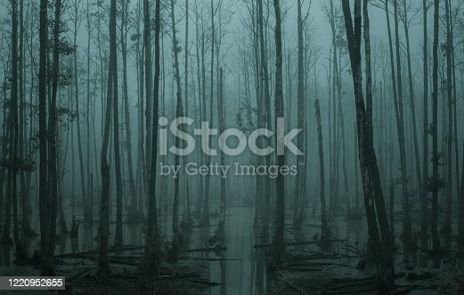 Empty, misty swamp in the moody forest with copy space