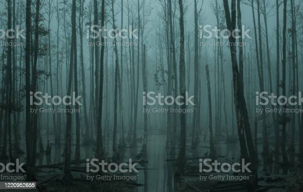 Photo of Empty, misty swamp in the moody forest