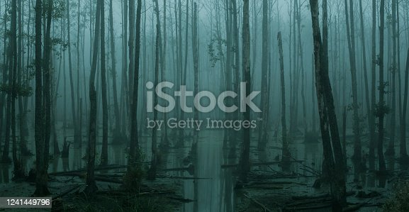 istock Empty, misty swamp in the moody forest 1241449796