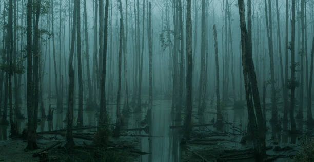 Empty, misty swamp in the moody forest stock photo