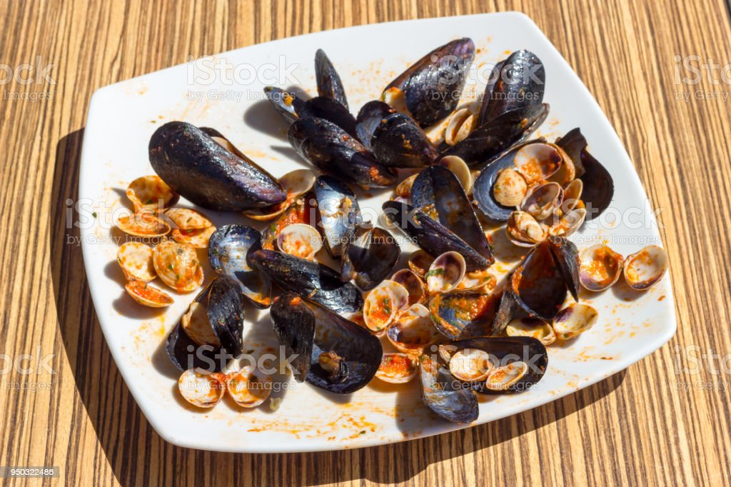 Empty mussels and clams stock photo