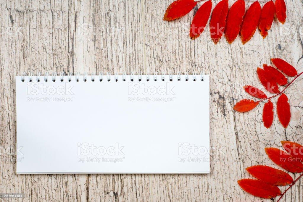 empty notepad with red autumn rowan leaves on white wooden planks stock photo