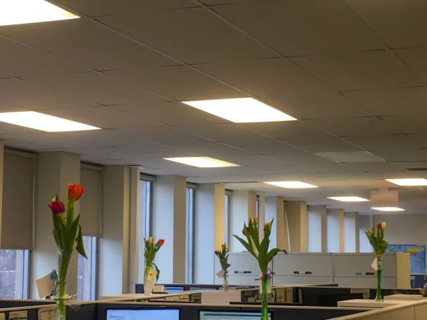 Empty office space modern open concept with cubicles and flowers stock photo