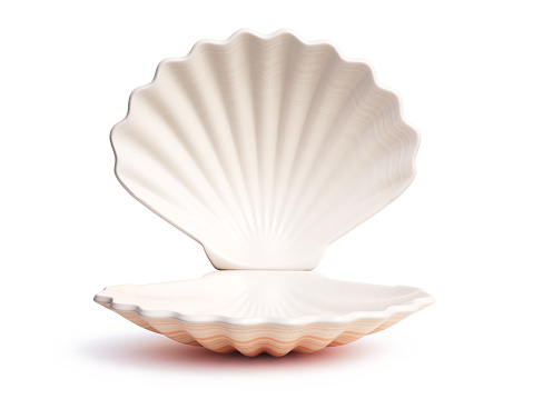 Empty open seashell 3d rendering