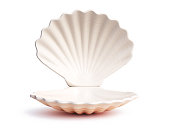 Empty open seashell 3d rendering isolated illustration