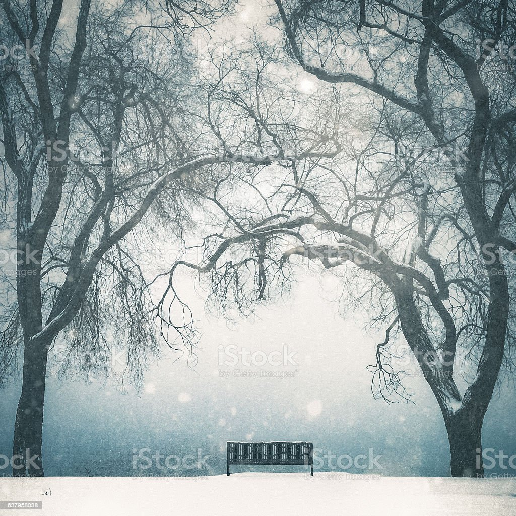 Empty Park Bench In Winter Scenic With Tall Bare Trees stock photo