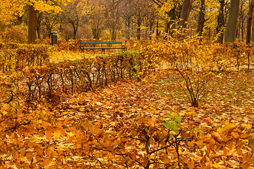 Autumn trees with yellow leaves in the city park. Autumn landscape.