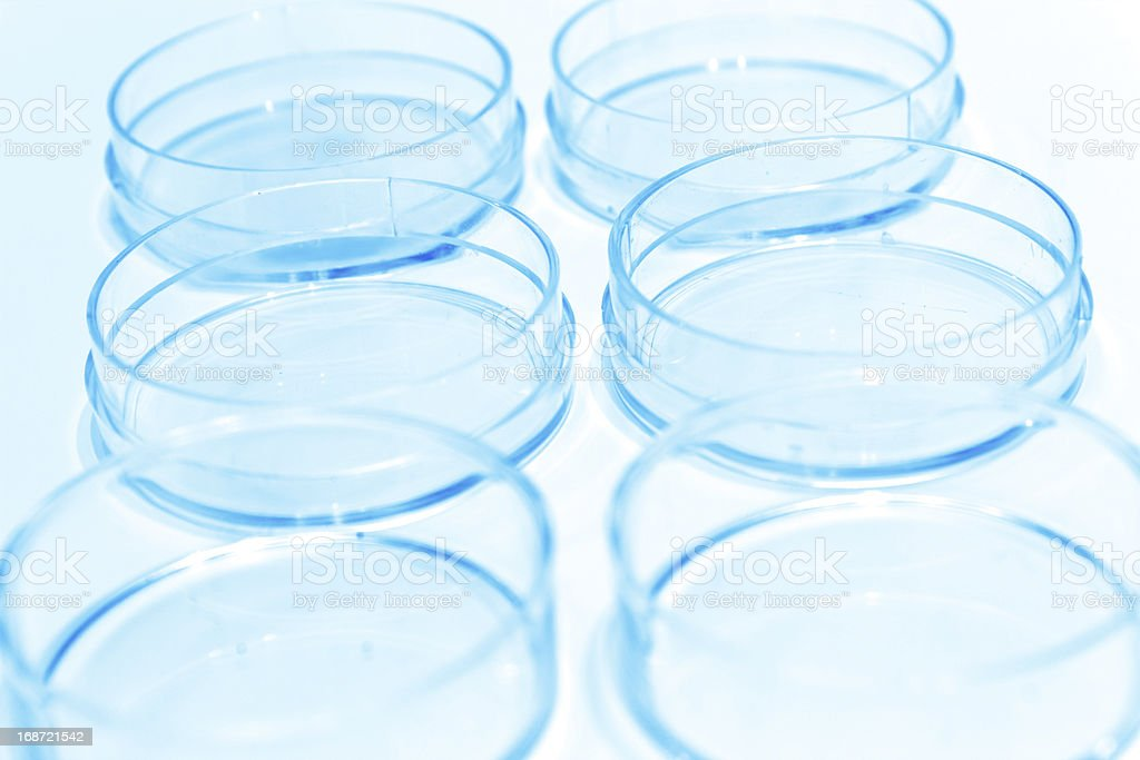 Empty Petri dish royalty-free stock photo