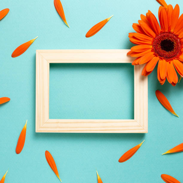 Empty photo frame with orange gerbera daisy flower petals on blue background. Floral composition, flat lay, top view, copy space stock photo