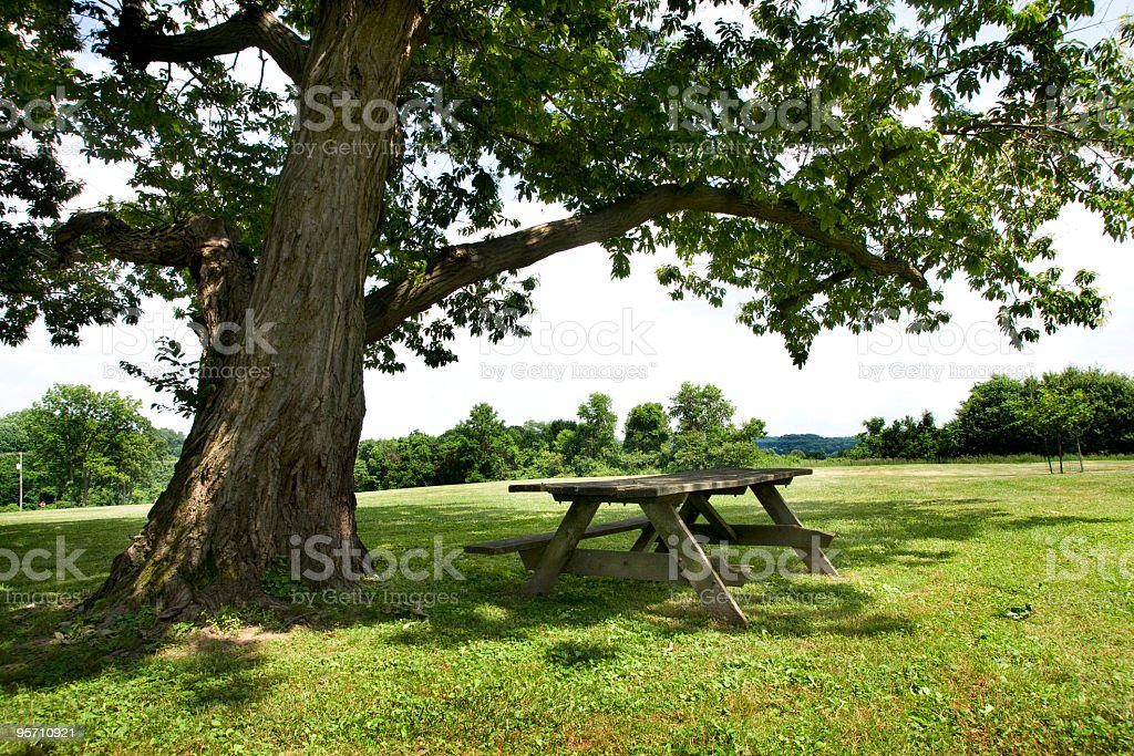 Empty Picnic Table and Tree stock photo