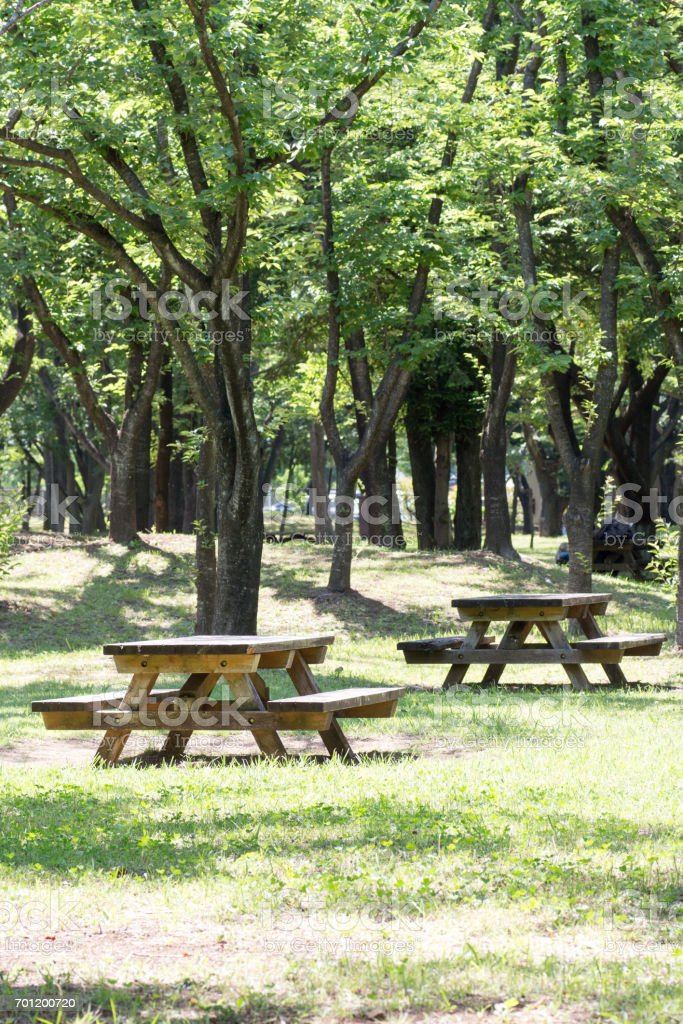 Empty picnic table in a tranquil park stock photo