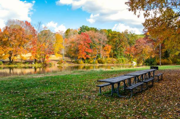 다채로운 가을 나무가 있는 강변 공원의 빈 피크닉 테이블 - 강둑 뉴스 사진 이미지