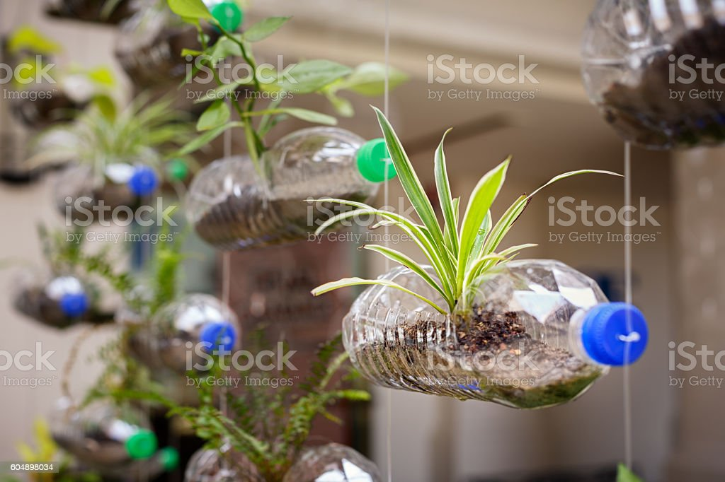 Empty plastic bottles use as a container for growing plant - foto de stock