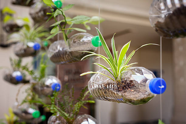 Empty plastic bottles use as a container for growing plant Empty plastic bottles use as a container for growing plant, recycling green concept, horizontal composition tree hugging stock pictures, royalty-free photos & images