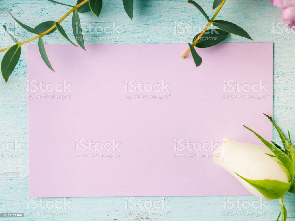 Empty purple card flower tulip rose pastel colors stock photo