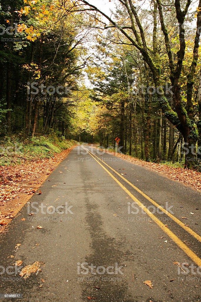 Empty Road in Autumn royalty-free stock photo