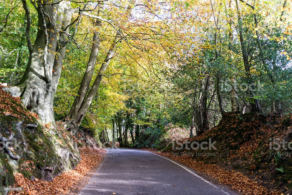 Empty road in Box Hill, Surrey, England, UK stock photo