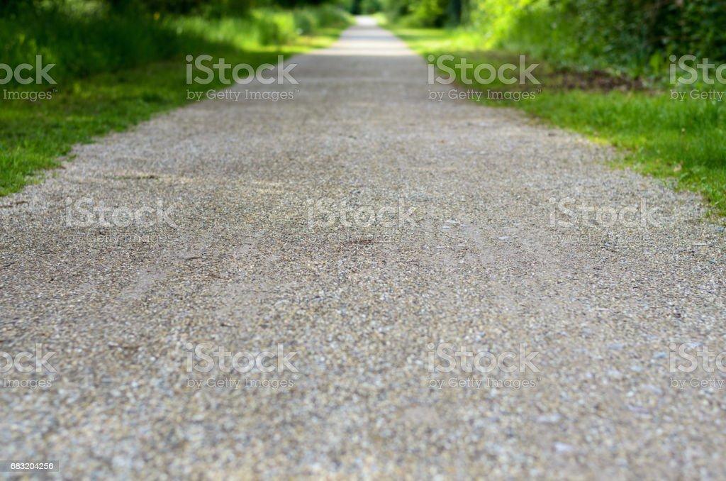 Empty rural road through leafy spring woodland 免版稅 stock photo