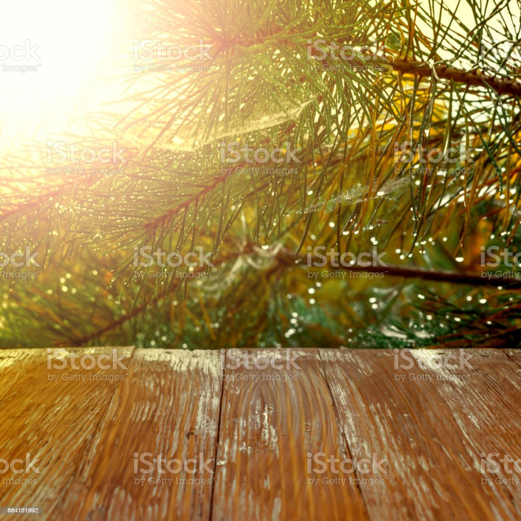 Empty rustic wood table top on christmas tree branches background with spider web in forest. Can montage or display your products royalty-free stock photo