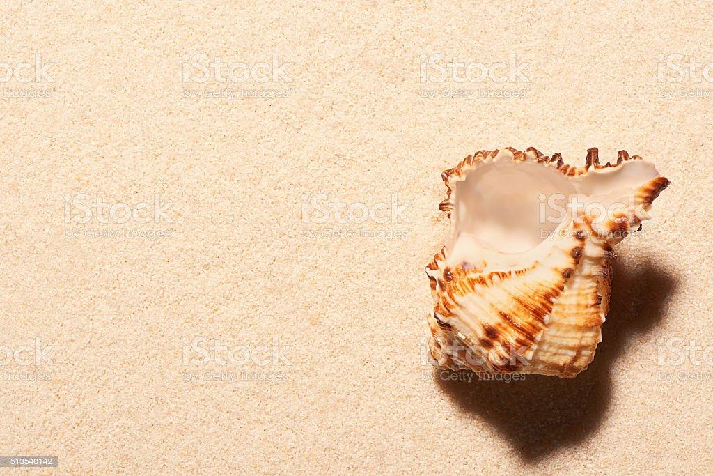 Vuoto Mare Conchiglie Sulla Sabbia Sfondo Di Spiaggia Estate