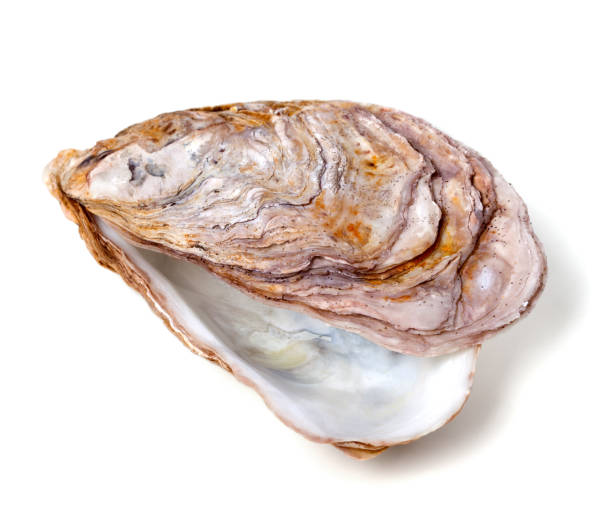 Empty seashell from oyster - foto stock