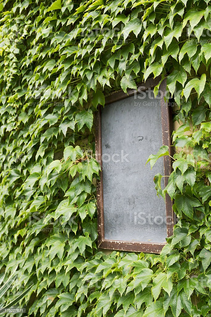 Empty sign with boston Ivy stock photo