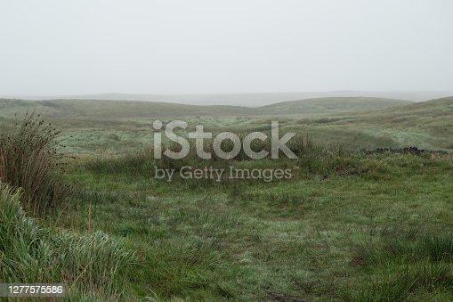 Empty grass field in the fog