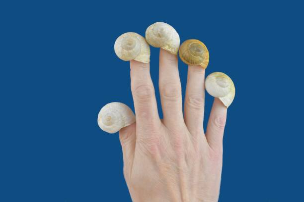 Empty snail houses on the fingers of a hand. Empty snail shells. Mortgage concept. Color classic blue. Copy space - mortgage loan, take out a mortgage... stock photo