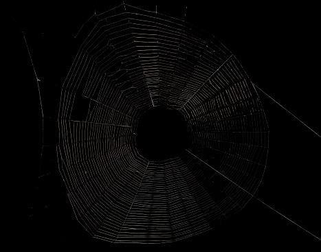 istock empty spider web isolated on black 477743859
