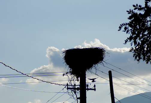 Empty stork nest high up on the electric pole in the summer