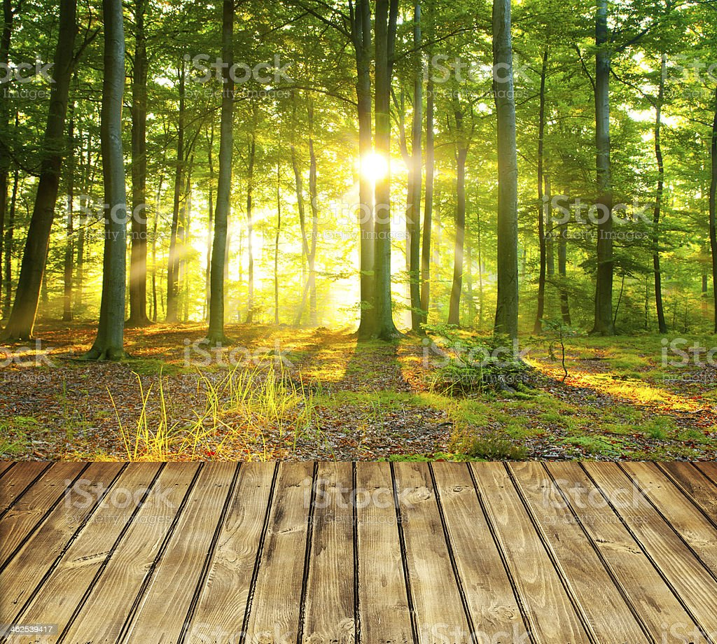 Empty table or deck in forest with sun rays shining stock photo