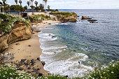 The Terry pine and La Jolla beach  San Diego, CA