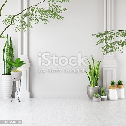 Empty Wall with Green Plants and Cactus. 3d Render