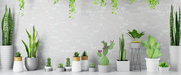 Empty Wall with Green Plants and Cactuses stock photo