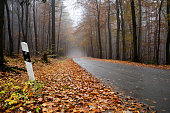 Empty wet forest road on a foggy autumn morning