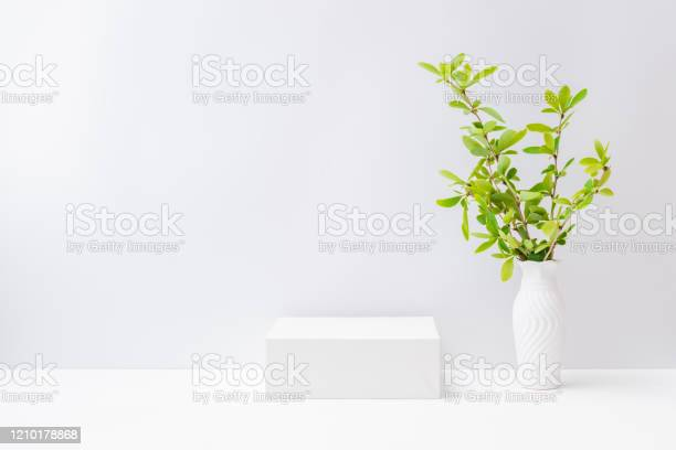 Empty white box and branches with green leaves in a vase on a light picture id1210178868?b=1&k=6&m=1210178868&s=612x612&h=mbmvzxmj90dxemxztk8kgk0sxhexgj9yfy8ay2tfmzy=