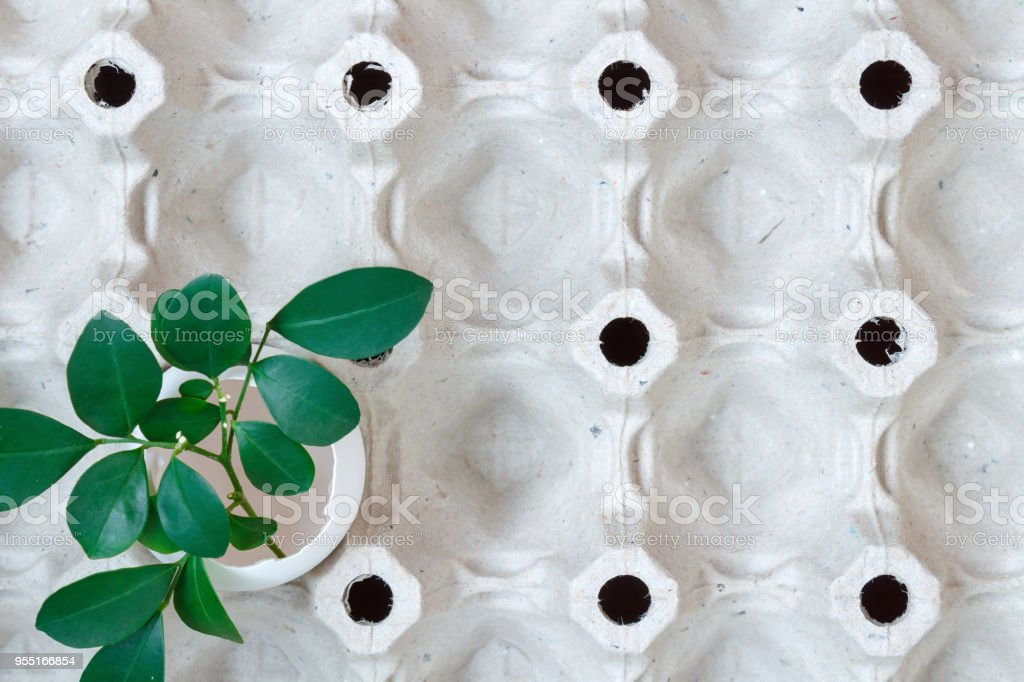 Empty white chicken egg shell with green leaves in empty paper tray. Top view stock photo