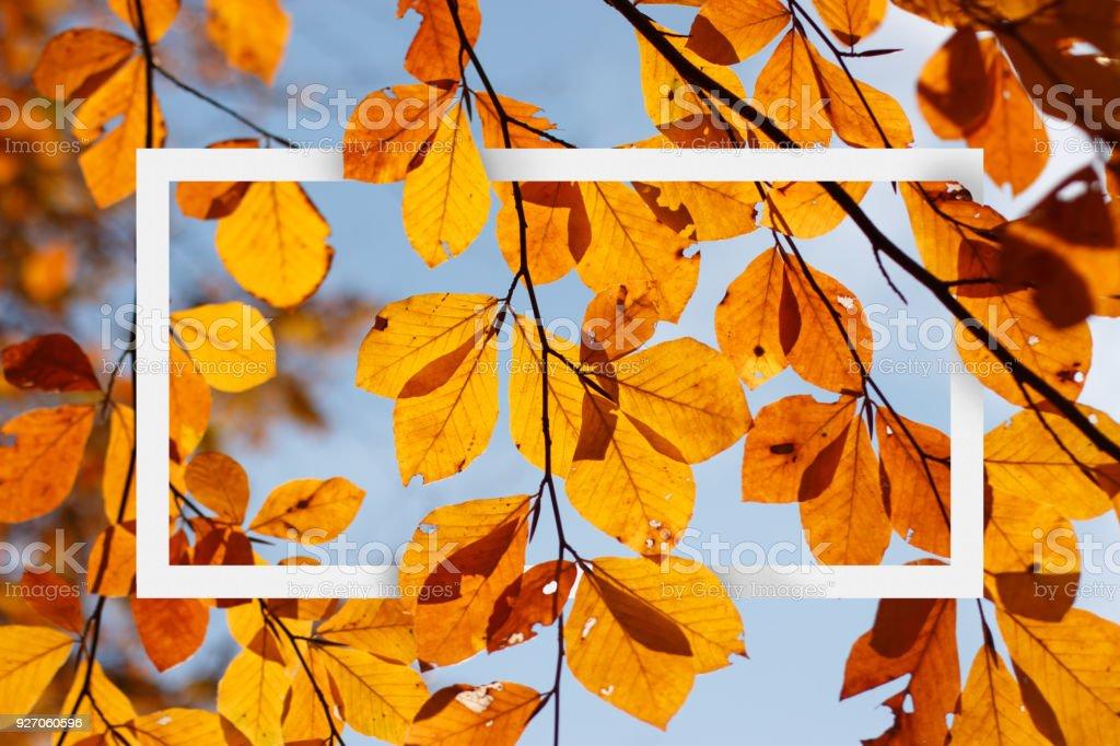 Empty white frame on autumn leafy branch stock photo