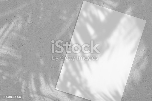 istock Empty white vertical rectangle poster or card mockup with palm leaves shadows 1203830200