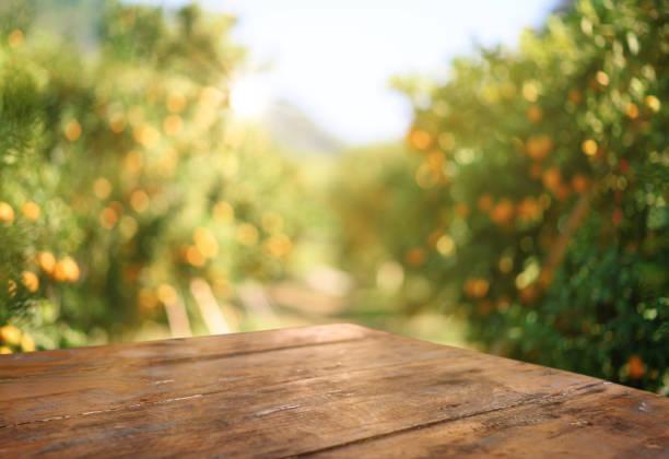 Leerer Holztisch mit freiem Platz über Orangenbäumen, orangefarbenem Feldhintergrund. Für Produktdisplaymontage – Foto
