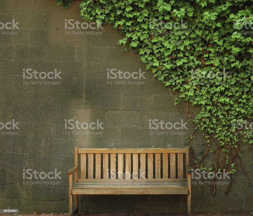 Empty wooden bench near wall with an ivy canopy. stock photo