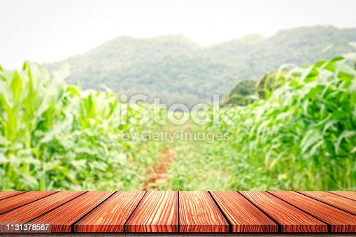 Empty Wooden board top table in front of blurred corn field background. Perspective wood in blurred green corn farm background for photo montage, product display or mock up your product.
