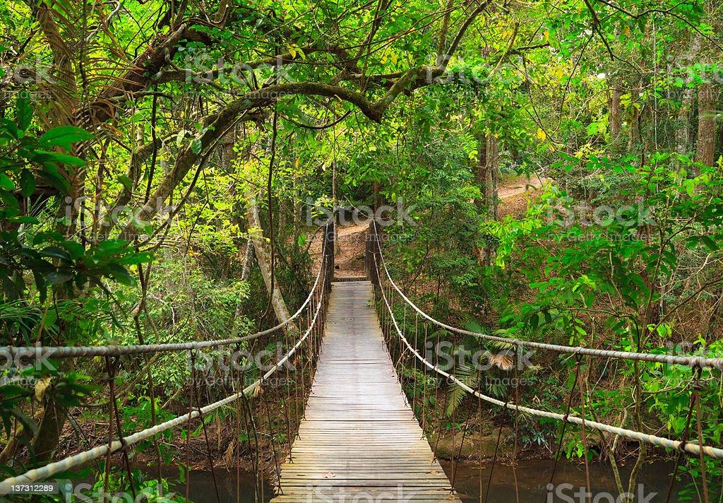 Empty wooden bridge in the jungle stock photo
