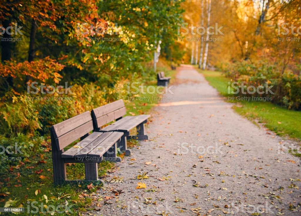 Empty wooden par bench in autumn scenery with fall colors stock photo